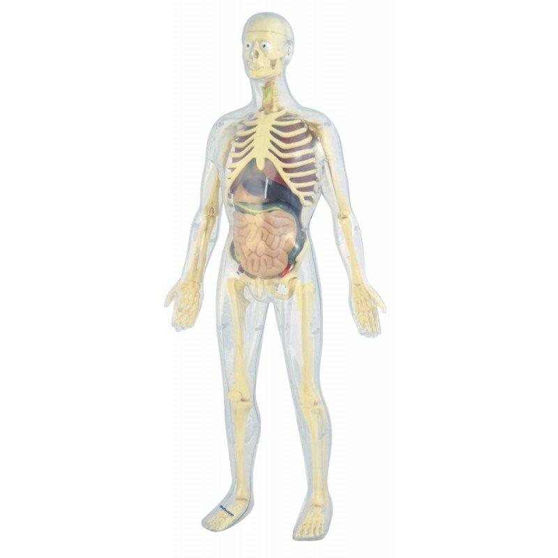 Juego Didactico a partir de 8 años Anatomia del cuerpo humano ...