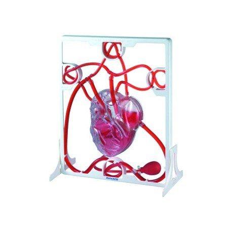 Juego Didactico a partir de 8 años Corzaon 3D Sistema Circulatorio Miniland